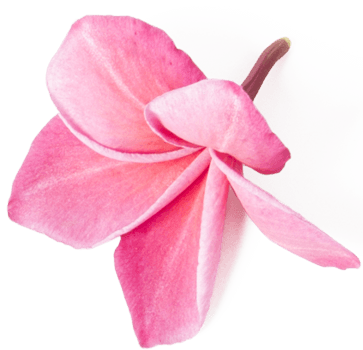 Blumen Echelmeyer